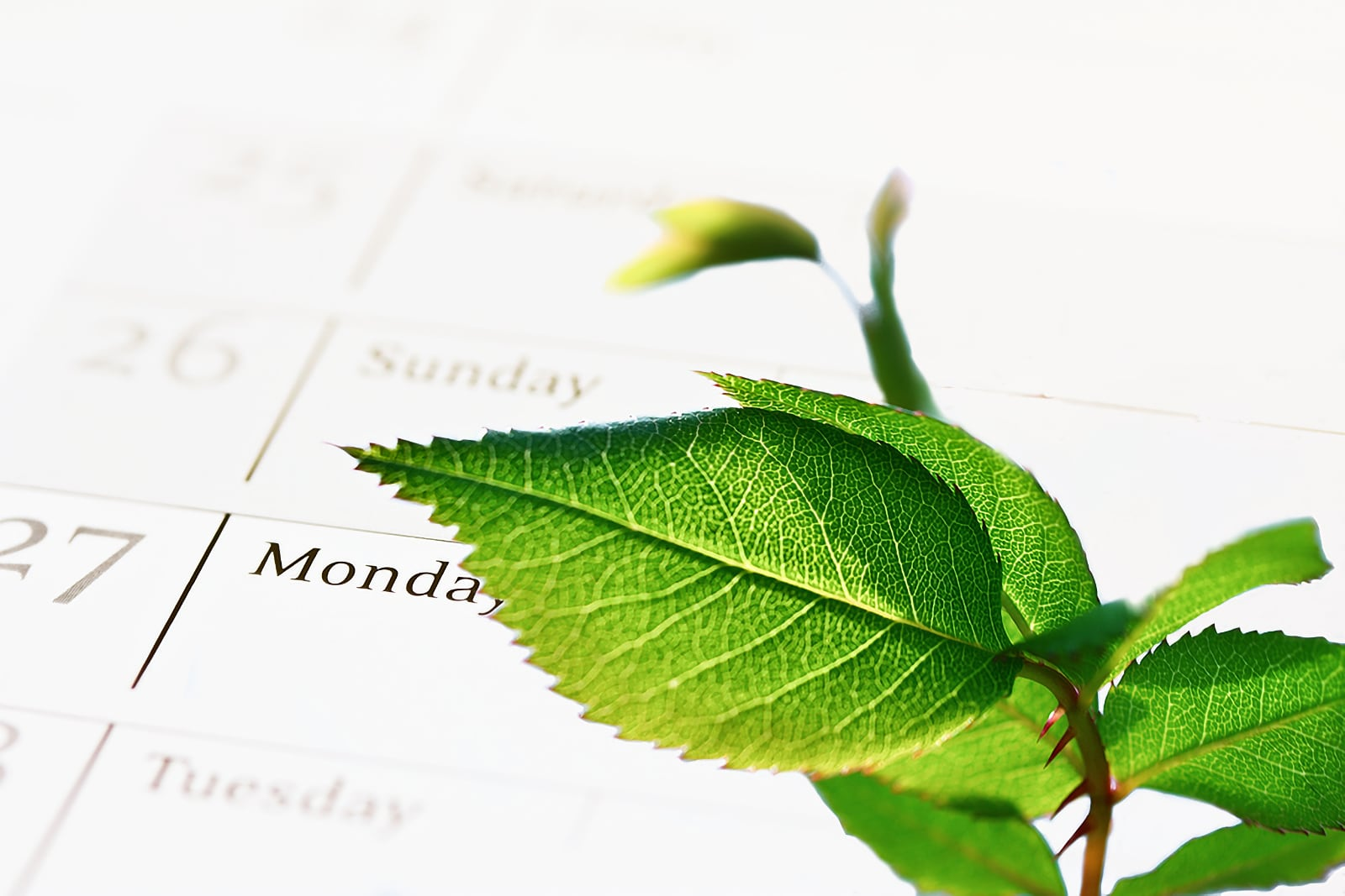 Photo concept of gree agenda, by showing some green leaves from a plant with a calendar behind