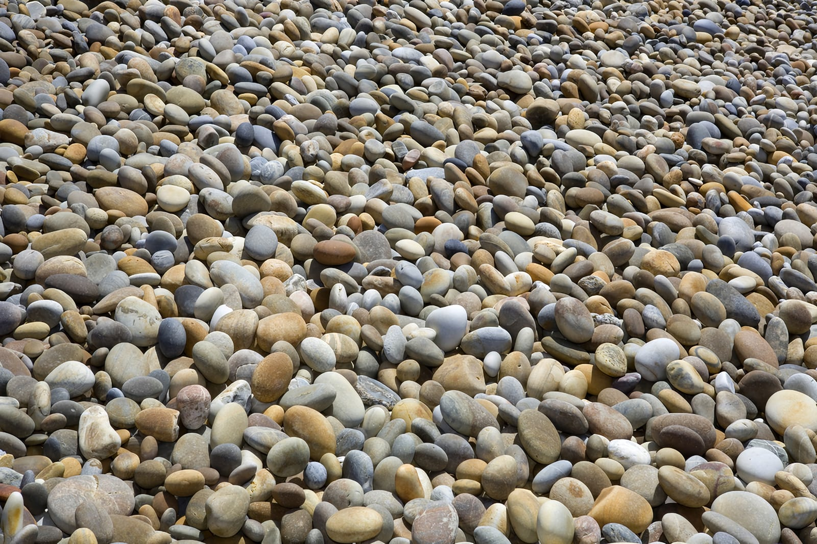 A seaside beach full of stone pebbles of different sizes, shapes, and colours